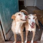 Willkommen im Leben – zwei Tierschutzhunde und ihre Integration in ein neues Zuhause
